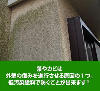 藻やカビは外壁の傷みを進行させる原因の一つですが低汚染塗料で防ぐことができます